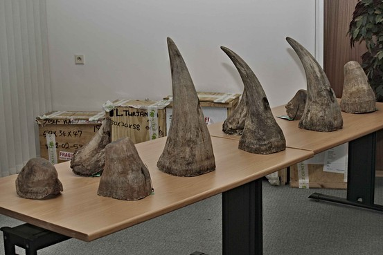 What Can I Do with My ElephantIvory & Rhino Horns What's App On? +27781701667